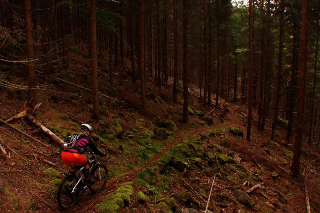 Ferienwohnungen im Verlegerhaus - Mountainbiking im Erzgebirge